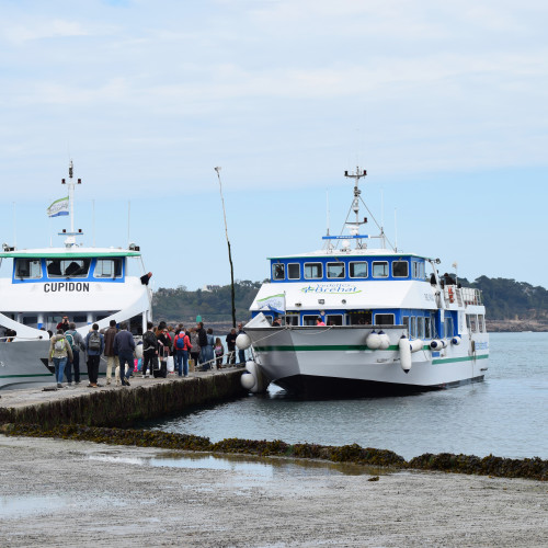 Croisière vers l'île de Bréhat (a/r)