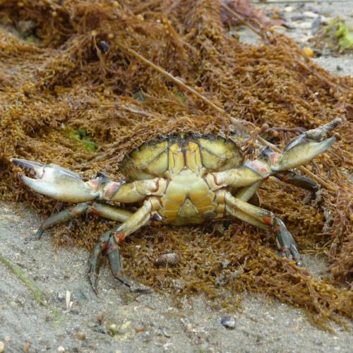 Sortie nature : la découverte de la laisse de mer